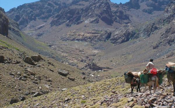 toubkal-mules