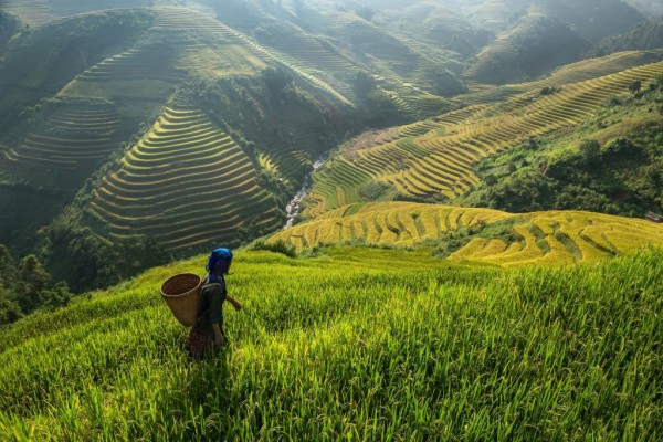 rice-terraces-Vietnam (1024 x 683)